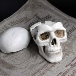 Фото шкатулка маленькая из гипса череп человека