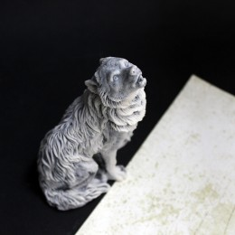 Фото серый волк