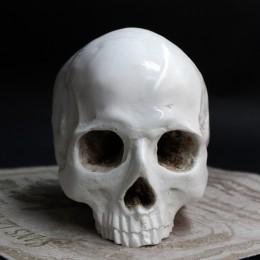 Фото Череп человека из гипса