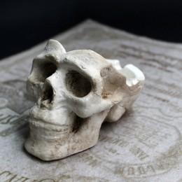 Фото Пепельница череп маленькая