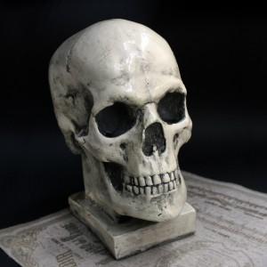 Фото Копилка Человеческий череп большой