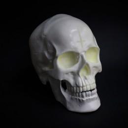Фото Ночник в виде черепа пластик