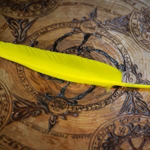 Фото Перо для письма - ручка шариковая одноразовая