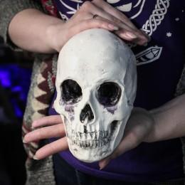 Фото Череп с нижней челюстью, тонировка, гипс