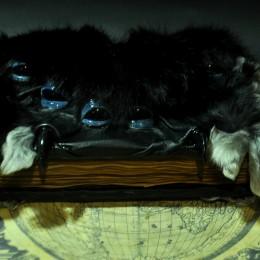 Фото Блокнот серии Чудовищные книги - Арахнидо
