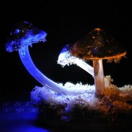 """Фото Ночник """"Сатурнианские грибы"""""""